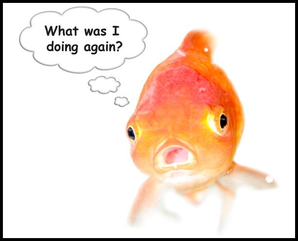 goldfishbubble1
